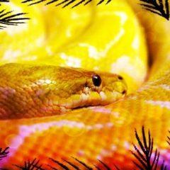 Are you a Python coder?
