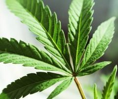 Singlepoint Acquires Funding to Tackle Cannabusiness Banking Problems With Bitcoin