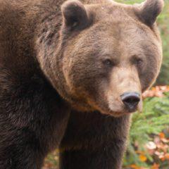 Thinking of Shorting Bitcoin Futures? GBTC Bears Nurse Big Losses