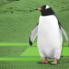 How Linux became my job