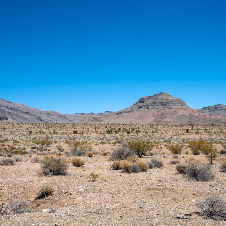 Lawyer Invests $300 Million to Build Crypto City in the Nevada Desert