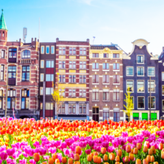 Dutch Central Bank Prepares to Start Regulating Crypto Sector
