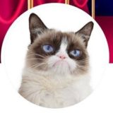 """""""Grumpy Cat"""" is Long Gone But Her Copyright Lives On in Court"""