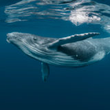 As Bitcoin's Price Spikes Pods of BTC Whales Begin to Shrink in Size